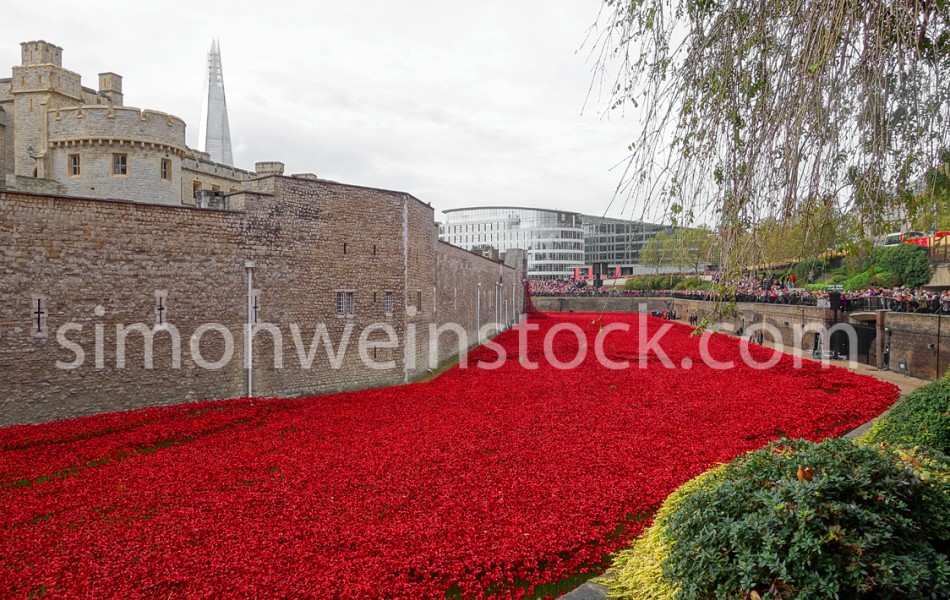 Tower Poppies 8